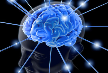 Soft Skills Training Companies in India that create change in the Brain's Neural Pathways